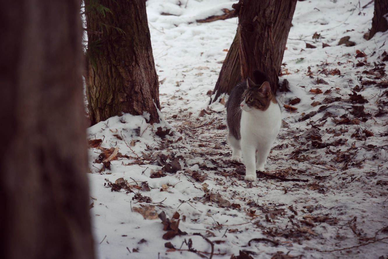 Our cat comes hiking with us - http://cutecatshq.com/cats/our-cat-comes-hiking-with-us/