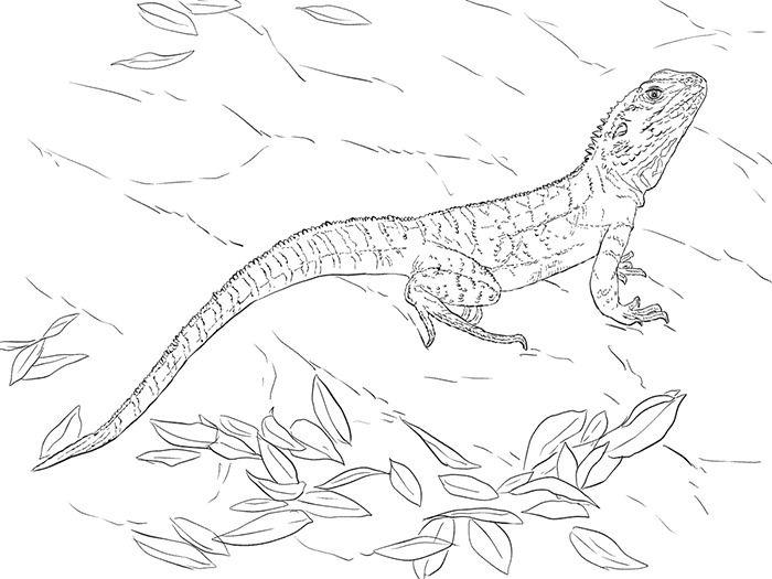 Animal Templates Free Premium Templates Animal Coloring Pages Dragon Coloring Page Coloring Pages