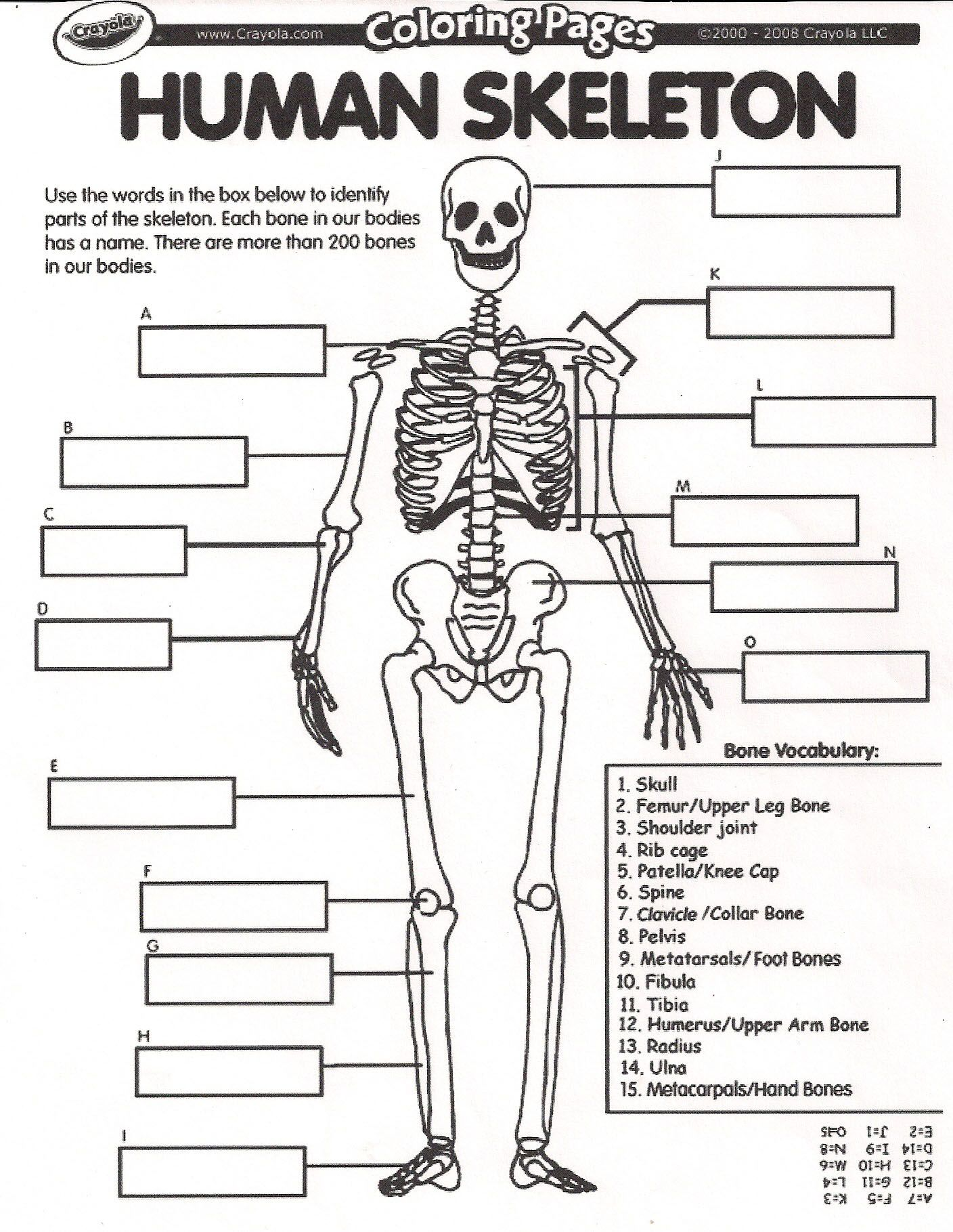 32 Unlabeled Skeletal Diagram