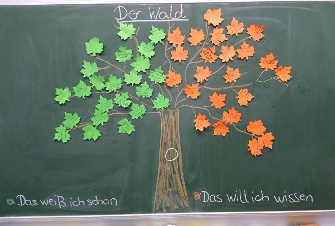 Heutiges Tafelbild Zum Einstieg In Das Thema Wald Auf Grüne