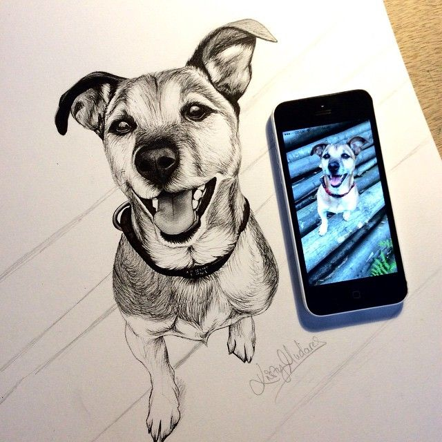 """""""Commission for Nick . #dogportrait #jackrussell #dogdrawing #jackrussellclub #fineliner #doglove #doglovers #doglover  #dogportraits #dogart #terrier…"""""""