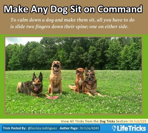 Dog Tricks Make Any Dog Sit On Command With Images Dog