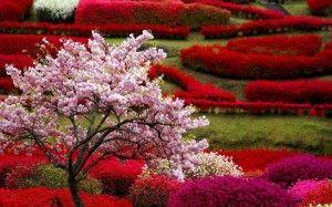 Sfondi Paesaggi Di Primavera Per Ipad Giardino Fiorito