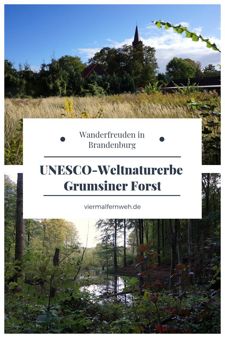 Unesco Weltnaturerbe Grumsiner Forst In 2020 Natur Reisen Ausflug