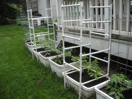 Beautiful Garden Ideas · Pvc Pipe Tomato Cage Made With The Cheaper T U0026 Elbow  Connectors.