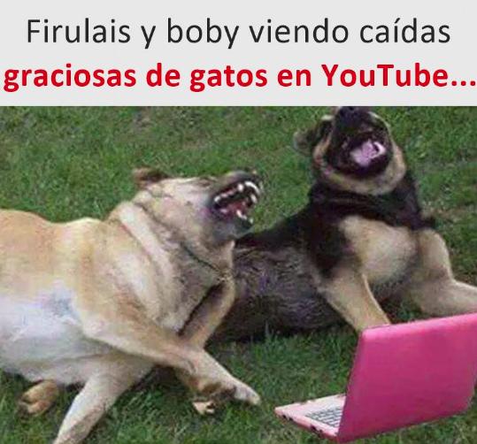 Como Contar Los Mejores Chistes Memes Chistes Chistesmalos Imagenesgraciosas Humor Animal Memes Funny Dogs Funny Animal Memes Animal Humour