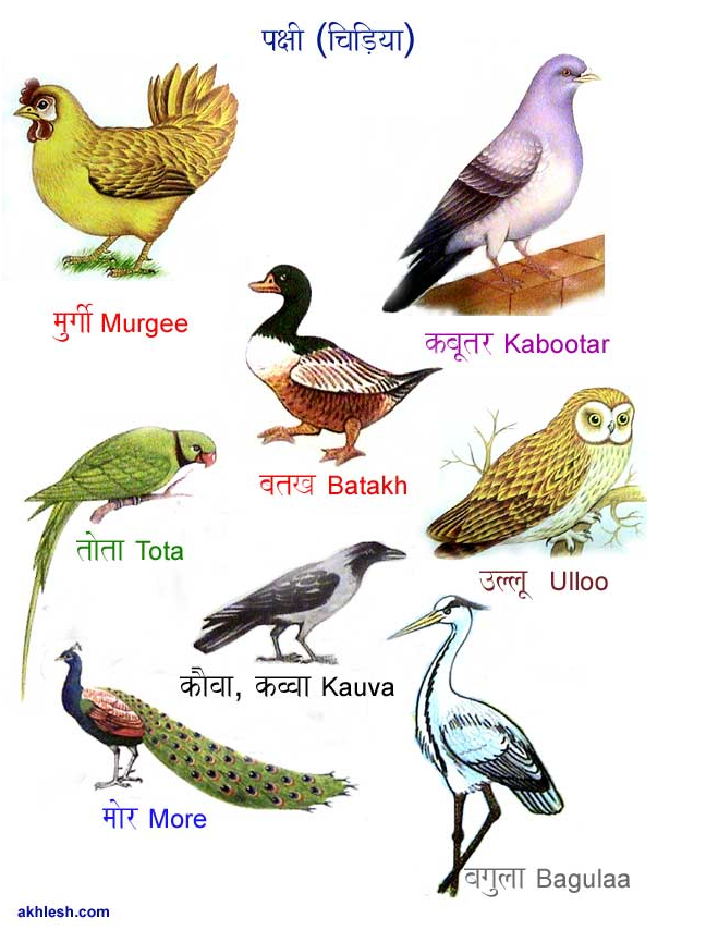 Animal names in Hindi. Love the drawings! See more at