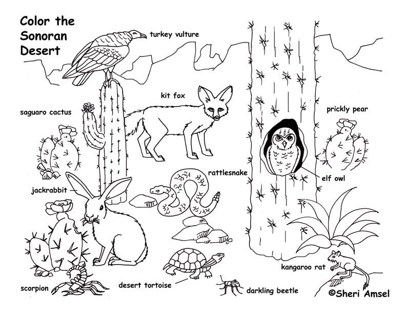 Desert Sonoran Coloring Page Desert Animals Desert Animals Coloring Desert Animals And Plants