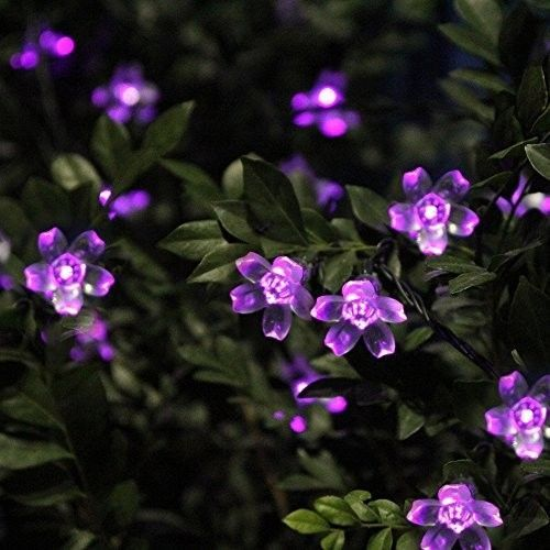 Purple string lights outdoor blossoms garden patio walkway xmas led purple string lights outdoor blossoms garden patio walkway xmas led solar outdoor living pinterest string lights outdoor blossom garden and walkways workwithnaturefo