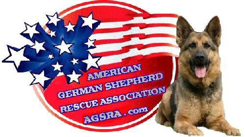 American German Shepherd Rescue Association