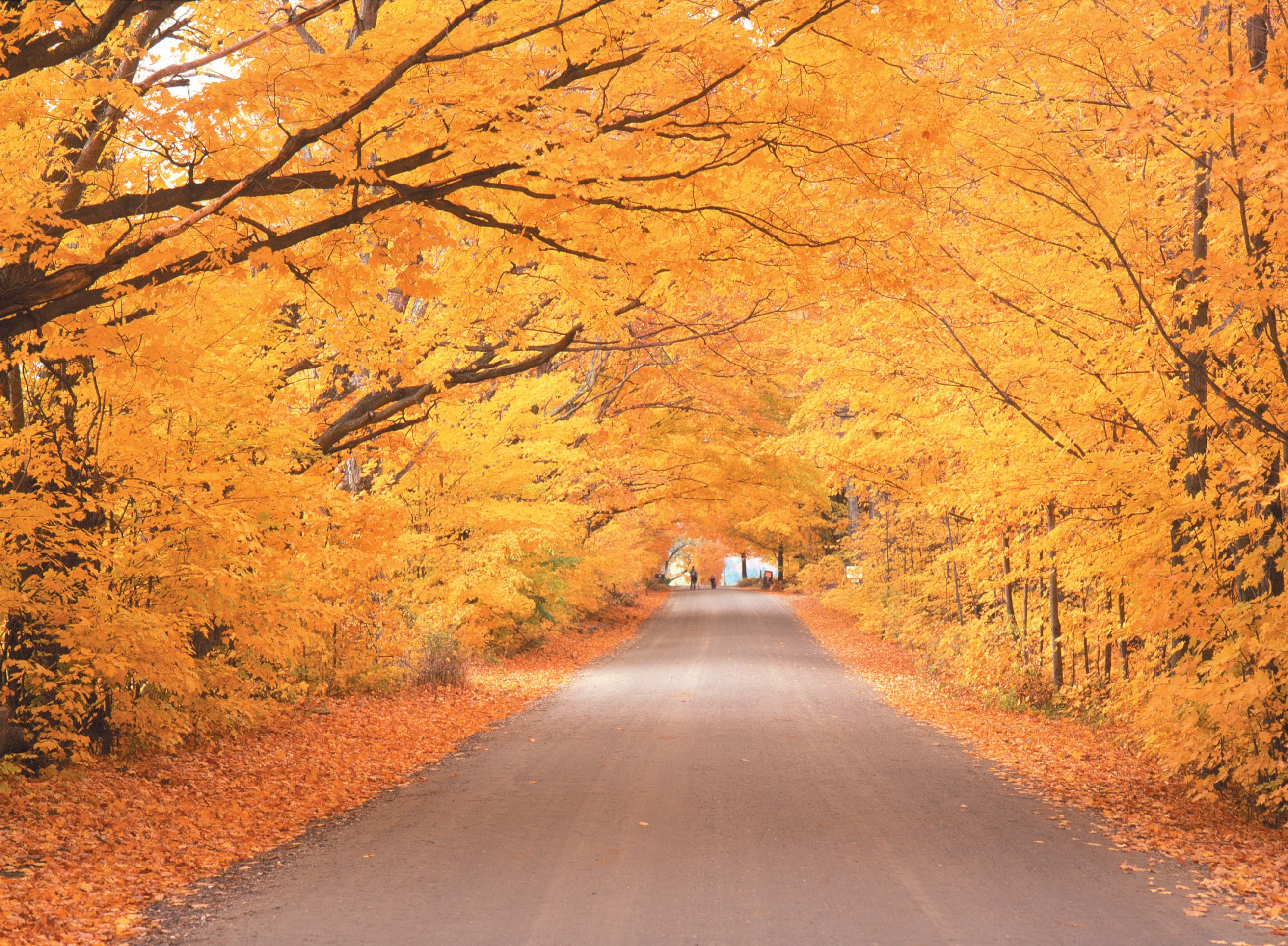 In the fall, Stowe\u0027s country roads become scenic thoroughfares to ...