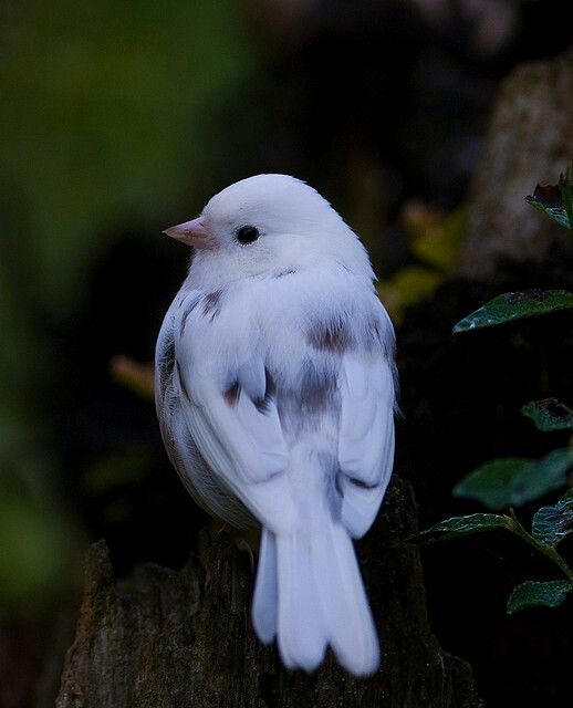 Pin By Sachalie On Feathered Friends Beautiful Birds Nature Birds Bird Pictures