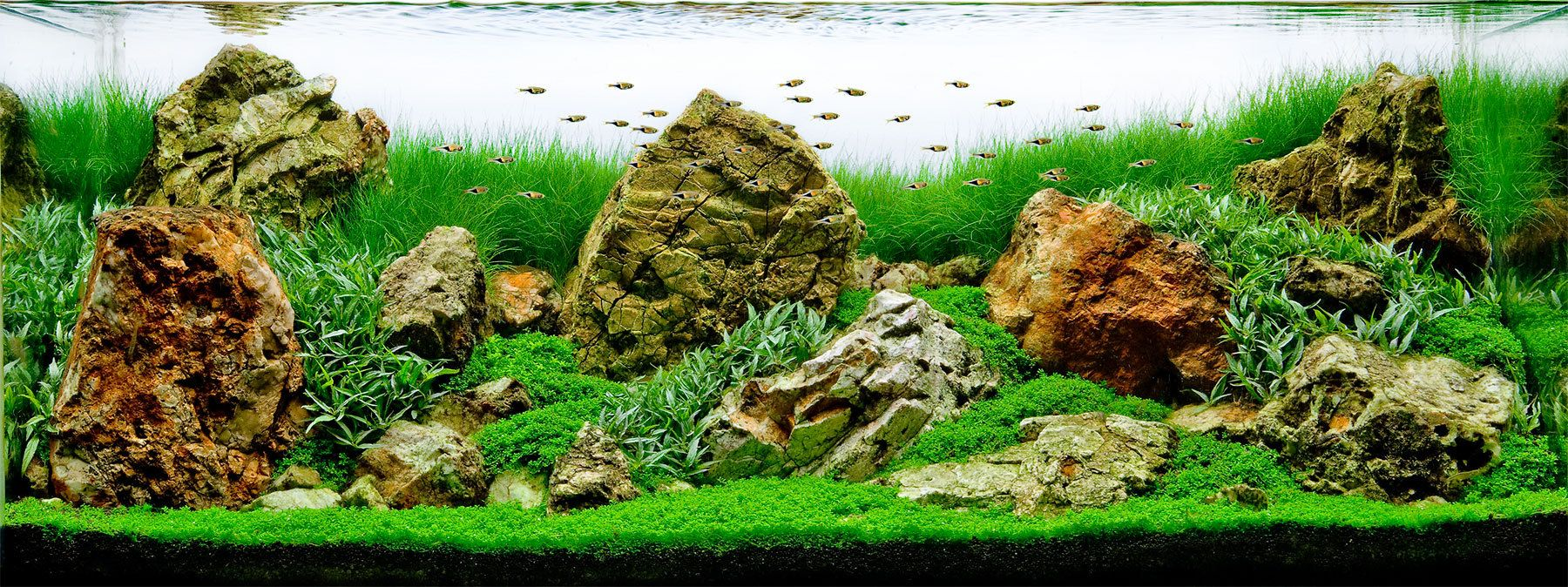 Charming Aquarium Design Group   An American Style Iwagumi Planted Aquarium