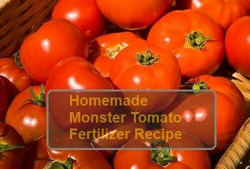 Tomato Fertilizer Tomato Fertilizer Tomato Tomato Blight 400 x 300