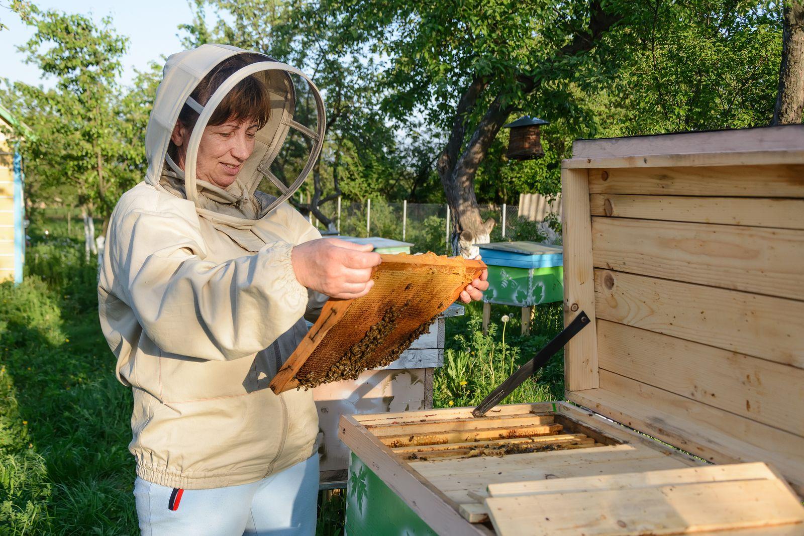 Backyard Beekeeping for Beginners (Part 1)   Backyard ...