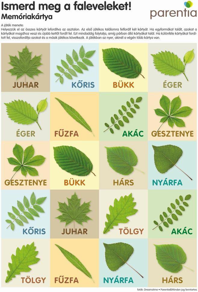 Belekezdtünk környezetből a fák, növények témakörbe, első körben eddig jutottunk:   Bevezetőként az évszakok ról, azok váltakozásáról, és ha...