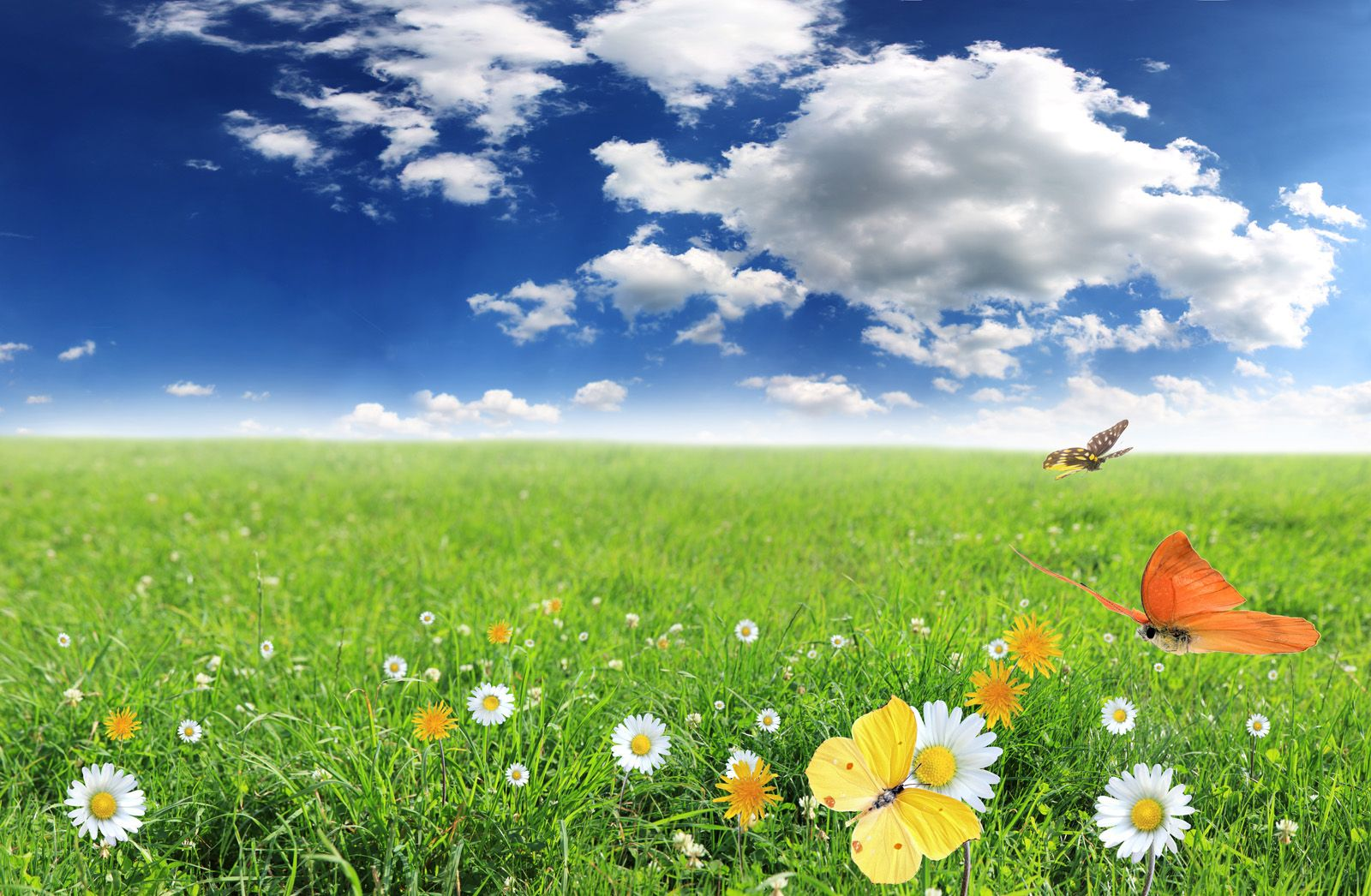 Field of daisy flowers khoirulpage flower pictures hd
