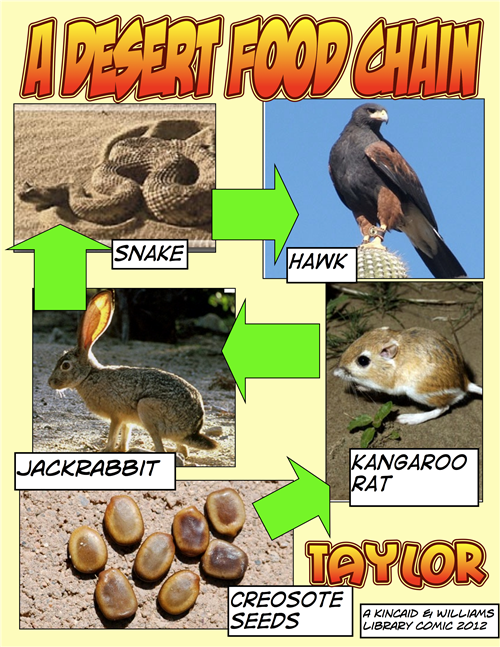 the desert food chain Food chain, Deserts, Habitats