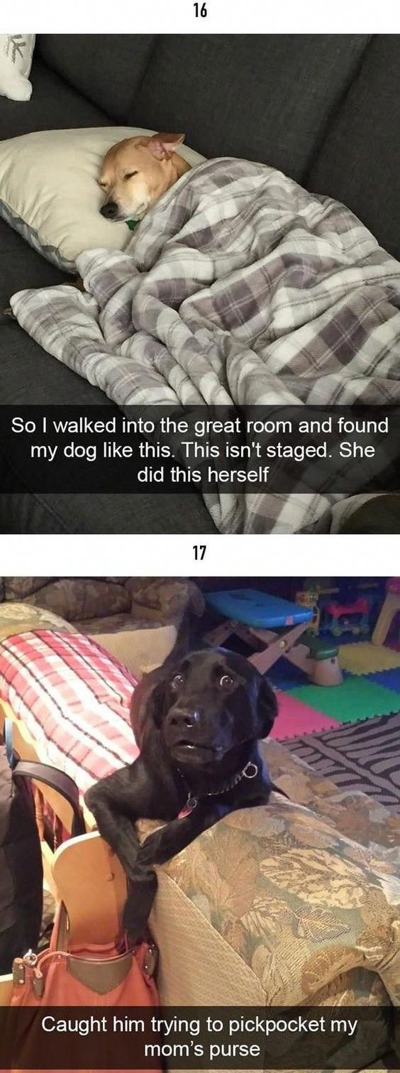 50+ Of The Happiest Dog Memes That Will Keep You Laughing