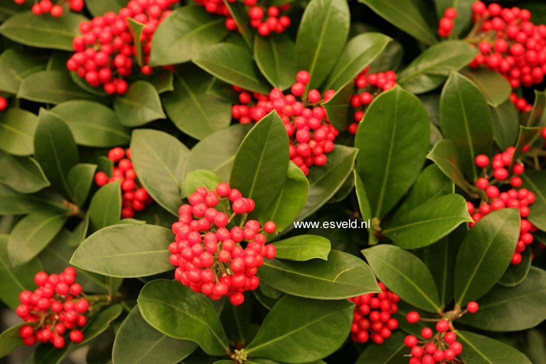 Pin Op Botanic Plant Chooser