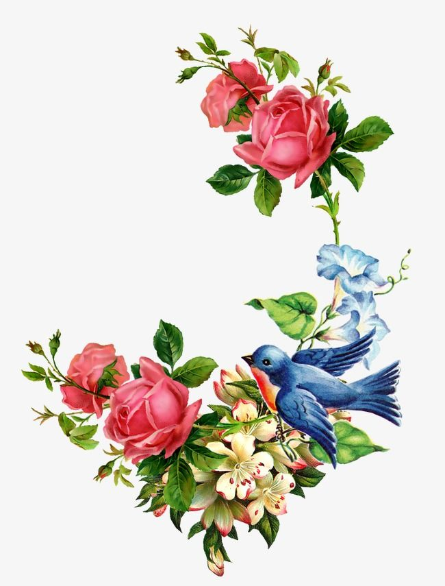 Hand Painted Birds And Flowers Rose Chinese Rose Hand Painted Flowers Png Transparent Clipart Image And Psd File For Free Download Flower Painting Flower Clipart Flower Art