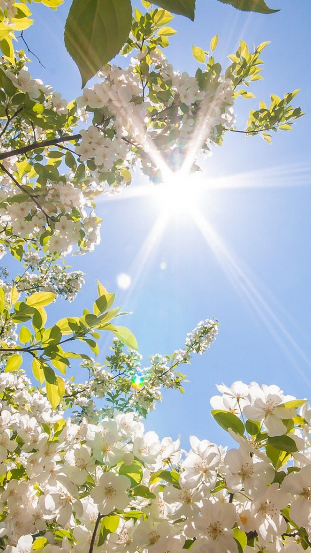 Hello Spring Wallpaper For iPhone | iPhoneWallpapers | Spring flowers wallpaper, Spring ...