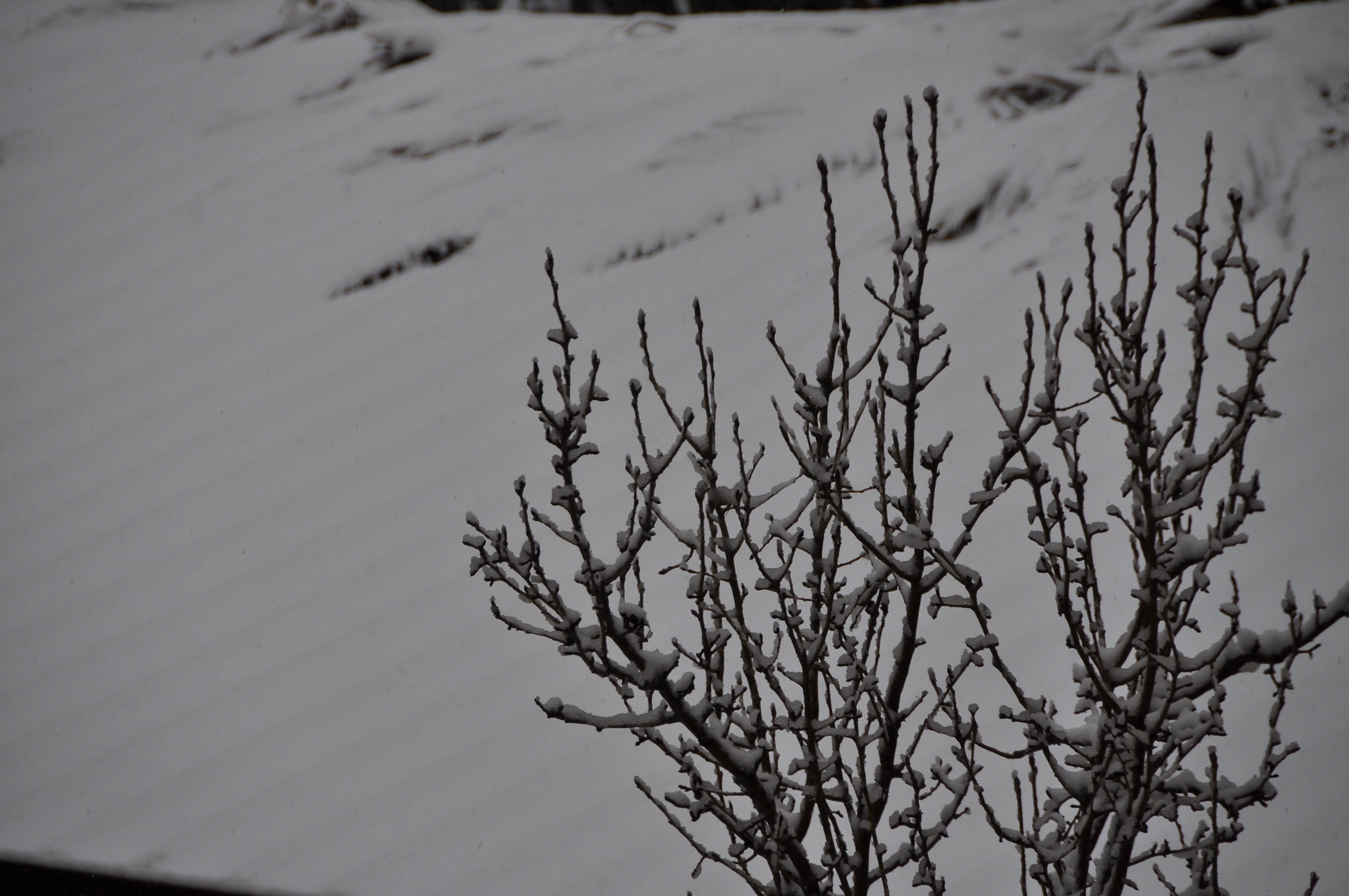 Semplicemente neve - Roma