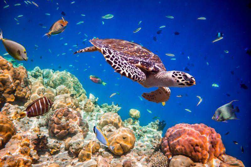 Unterwassertiere Bilder