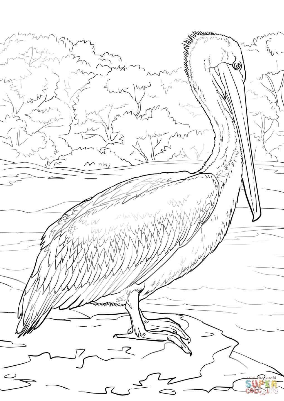 Pelikan Malvorlagen di 6