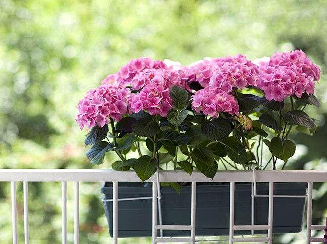 Balkonpflanzen für Norden, Süden, Osten und Westen