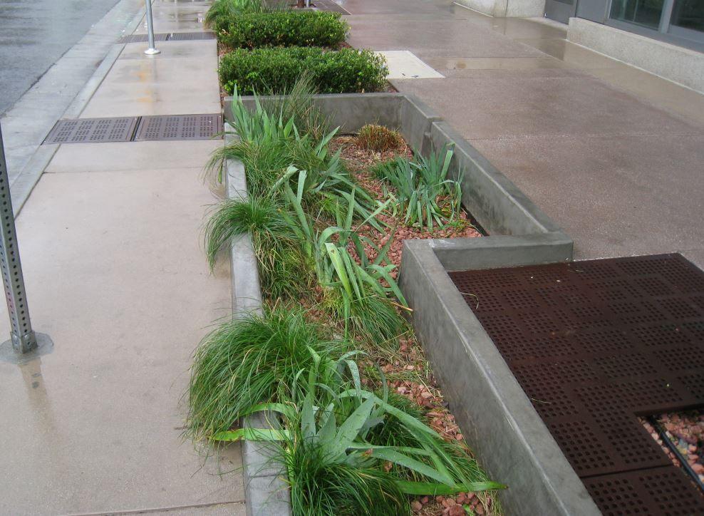 University Park Rain Gardens To Grow City Of Los Angeles Stormwater Program Rain Garden University Park Stormwater