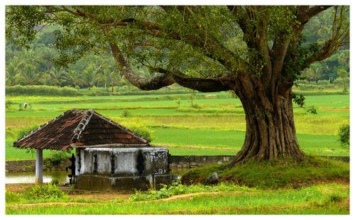 A Beautiful Kerala With Nature And Beautiful Places Village Photography Kerala Tourism Village Photos