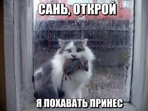Фото приколы со смешными котами и кошками | Смешно ...