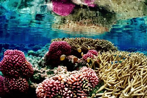 gorgeous coral reef. amazing color