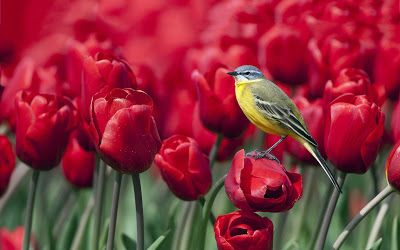 Red Roses and Bird