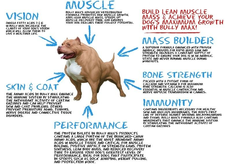 Bully Max Dog Supplement Benefits Jpg 779 568 Bully Max