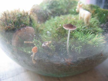 mushroom terrarium