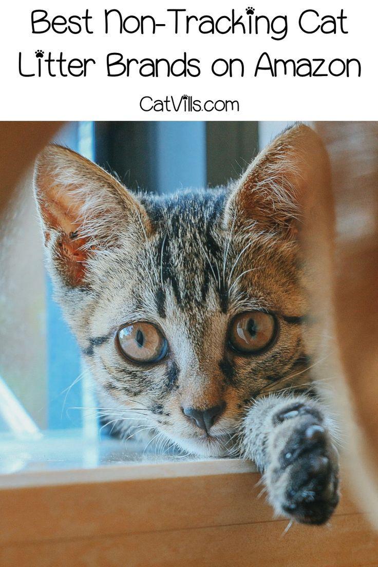 Top 10 Best NonTracking Cat Litter Brands Cat litter