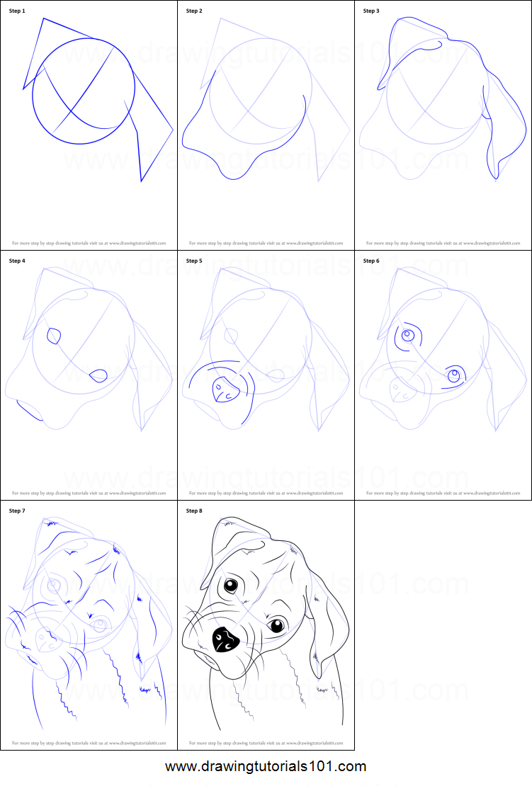 How To Draw A Puppy Face : puppy, Boxer, Medium, Large, Animals., Short, Hairs., Breaded, Germany., Drawing, Tutorial,, Animal, Drawings