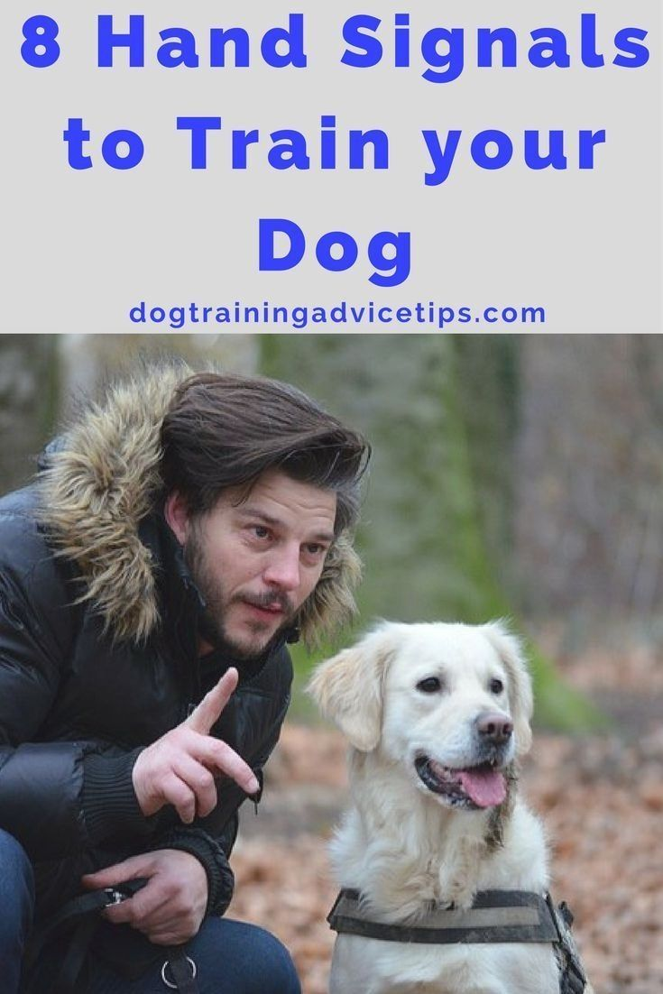 Dog Training Info A Spray Bottle Filled With Water Is A Great