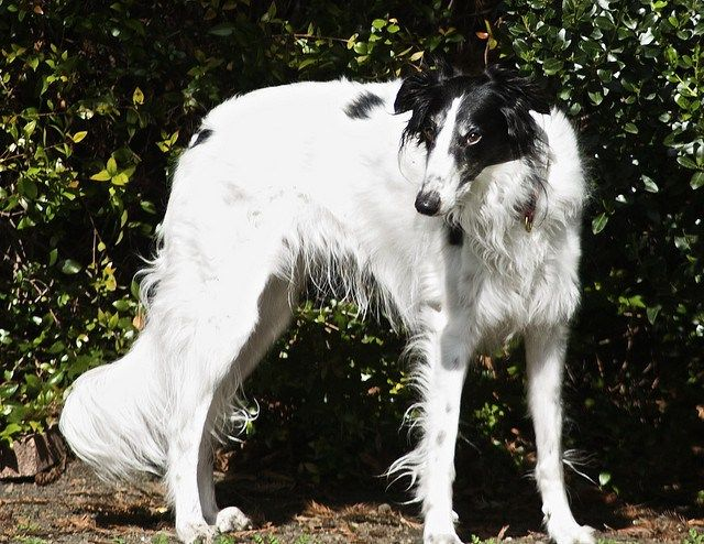 Posts About Breed Love On Doggerel Unusual Dog Breeds Breeds Big Dogs