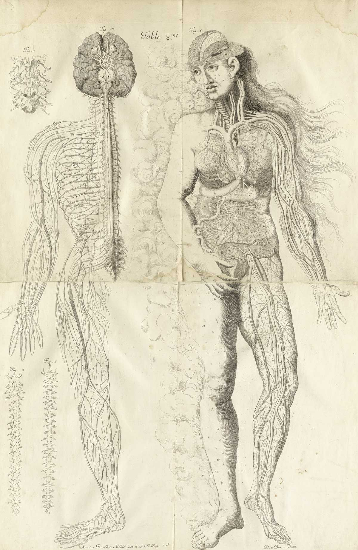 Nervous system and female anatomical figure, from Amé Bourdon\'s Nouv ...