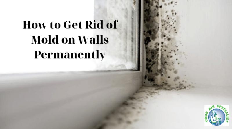d385a52e4d231e5127f00be31344e676 - How To Get Rid Of The Mold In The House