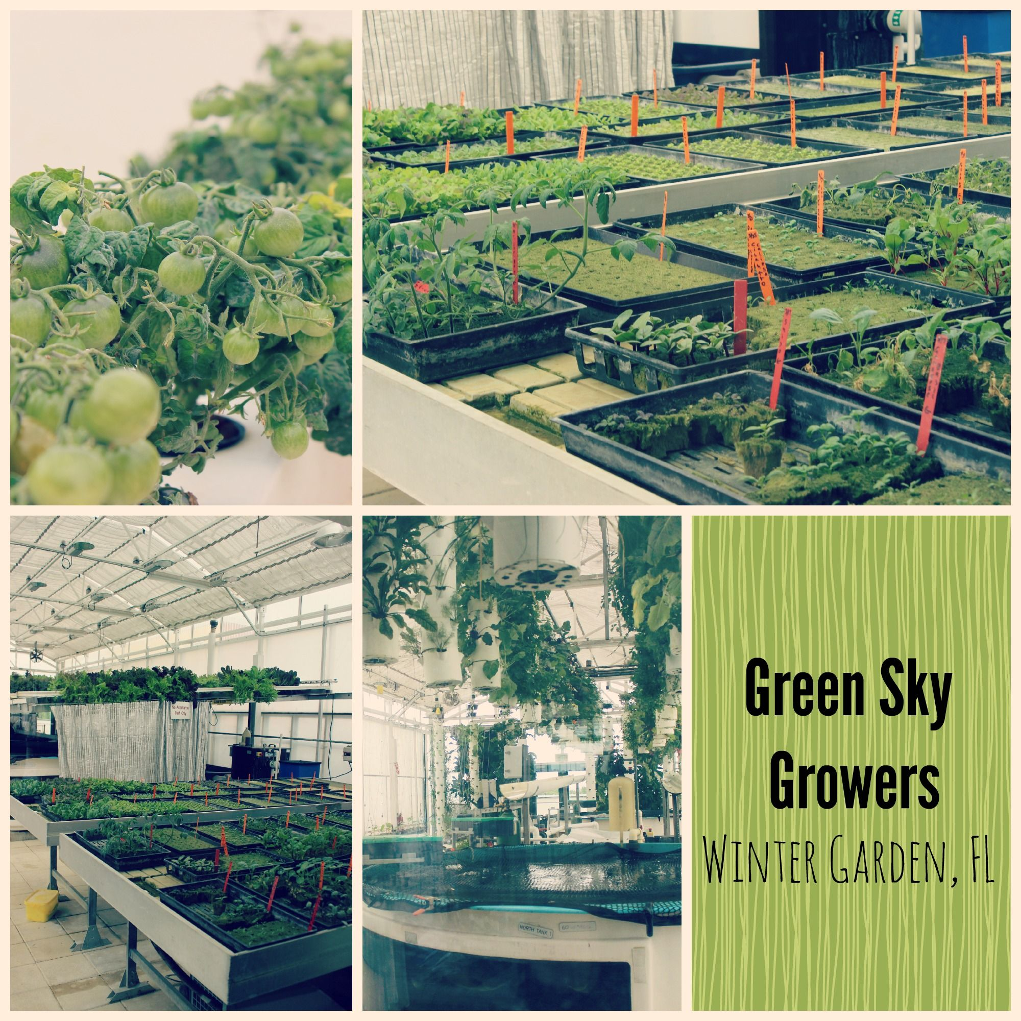 green sky growers is a local rooftop farm that produces fresh