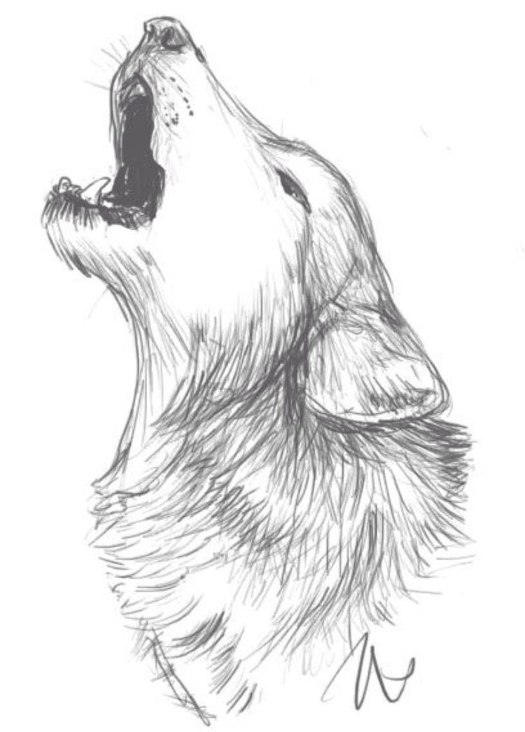 Wolf Face Howling Drawing