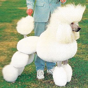 My Days As A Red Hot Sun Exclusive Standard Poodle