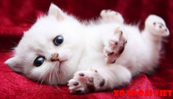 Nằmmơ thấy mèo con đánh con gì? đánh số mấy