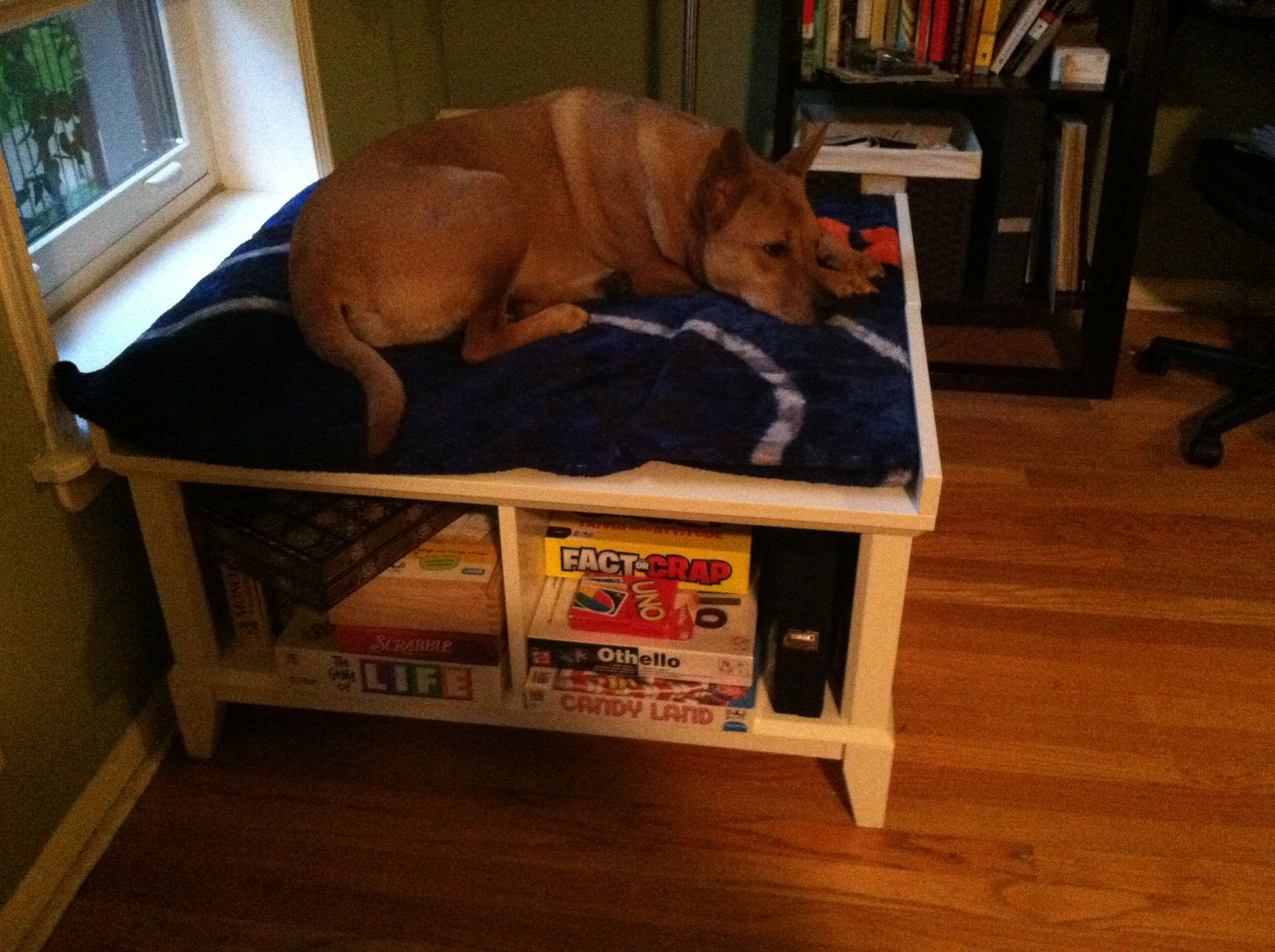 Raised dog bed... 2 storage benches back to back, a