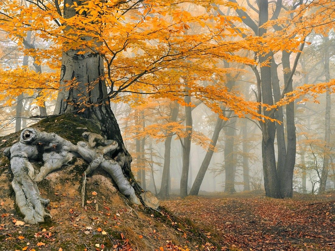 Untitled.....tree, forest