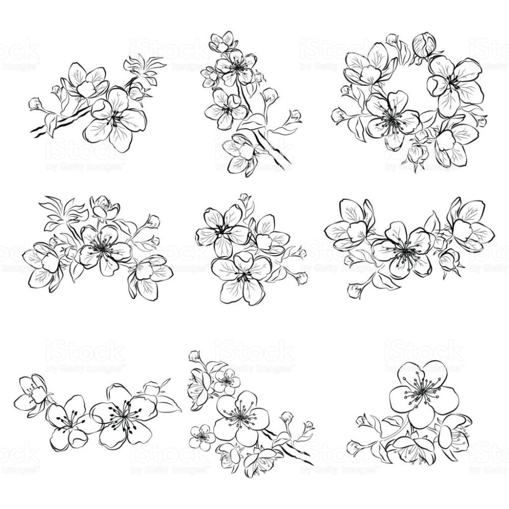 Fleur De Cerisier Tatouage Noir Et Blanc Recherche Google En 2020 Tatouage Noir Et Blanc Fleur Noir Et Blanc Tatouage Fleur